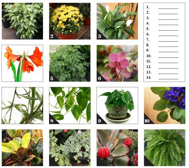 Quiz-plants-W13
