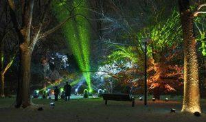 Morton Arboretum's Illumination
