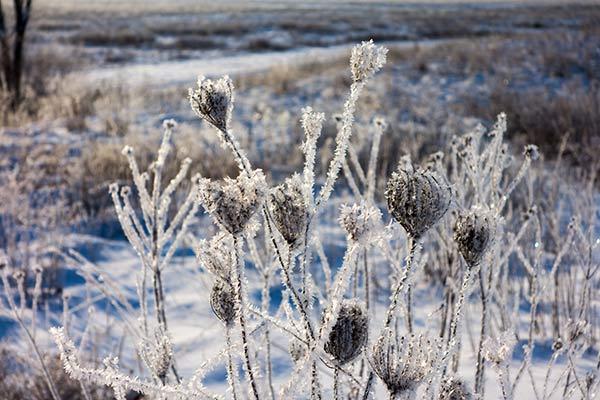"""Winter Gems"", Photography by Brad Nordlof"