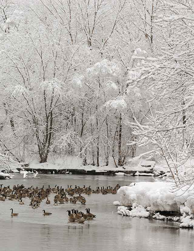 Winter Watering Hole, photography by David C. Olson