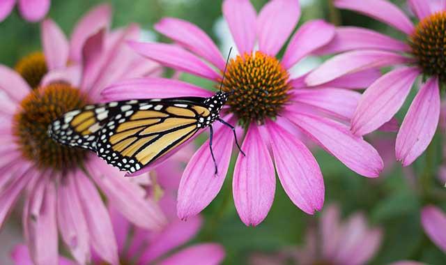 Quiz-butterfly-Sum16